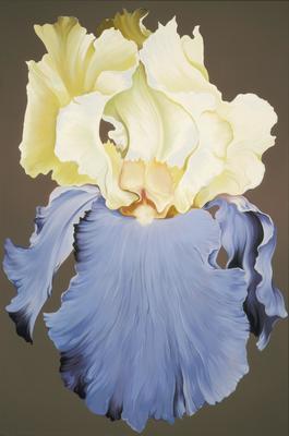 Yellow and Blue Iris; Lowell Nesbitt; American, 1933-1993; 1976.18