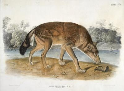 Artist: John James Audubon, American, born Saint-Domingue (now Haiti), 1785-1851