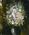 Artist: Maurice de Vlaminck, French, 1876-1958