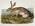 Artist: John Woodhouse Audubon, American, 1812-1862
